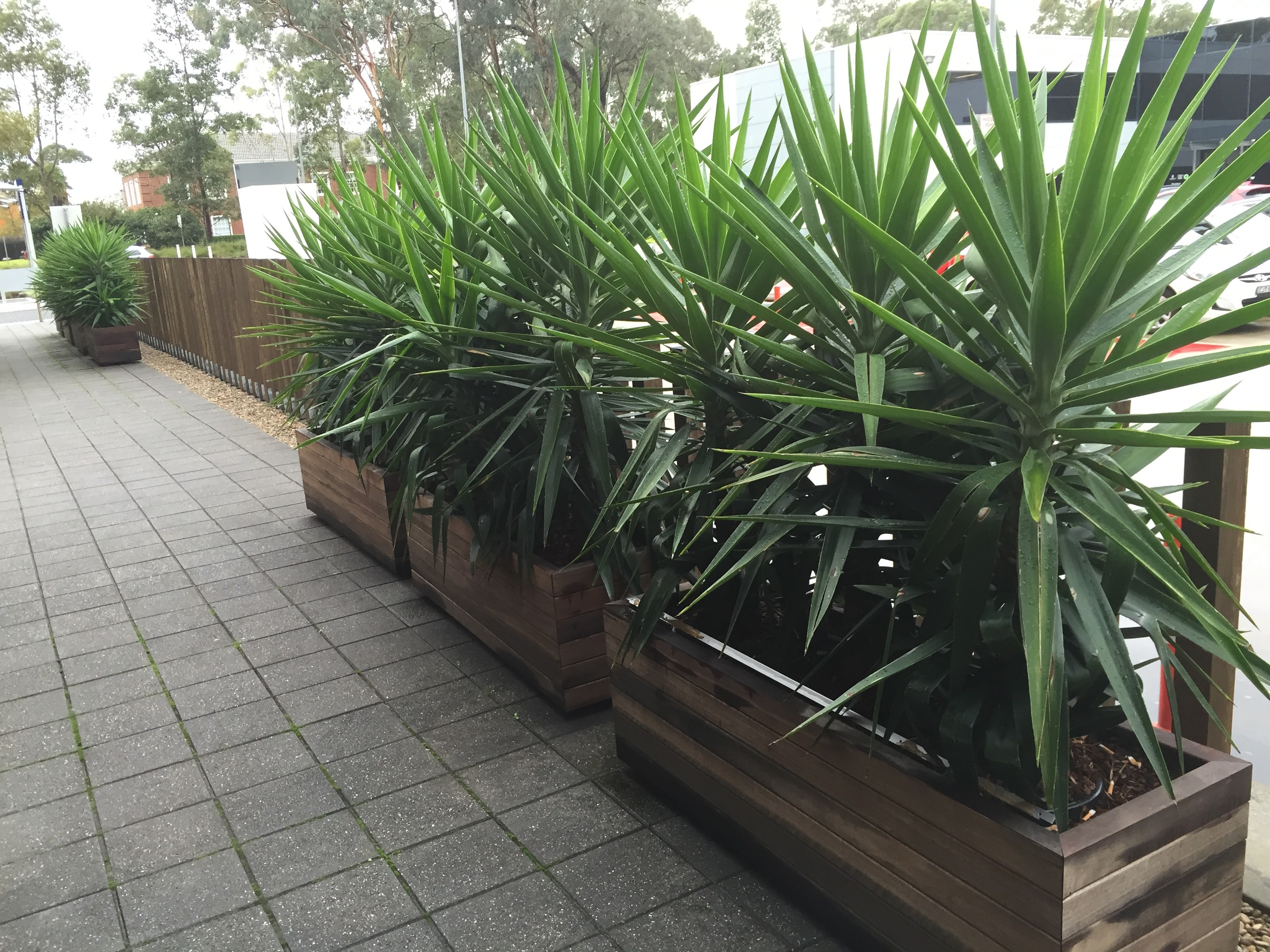 2 - Recycled Timber Planter Boxes